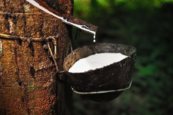 Thailand to issue bonds to support rubber farmers hinh anh 1
