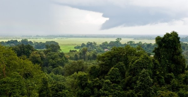 Laos signs Asian Forest Cooperation Organisation agreement hinh anh 1