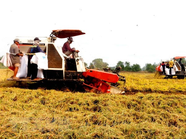 VnSAT helps promote sustainable rice farming in Tien Giang hinh anh 1