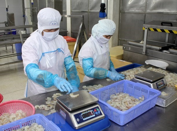 EC ready to support Vietnam in fighting IUU fishing: EU commissioner hinh anh 1