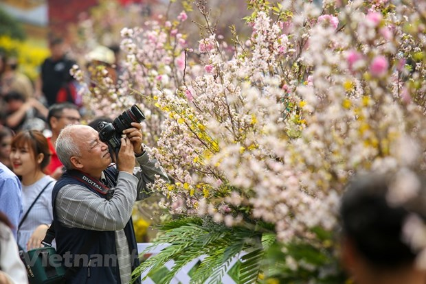 Japanese cherry blossom festival in Hanoi extends to March 27 hinh anh 1