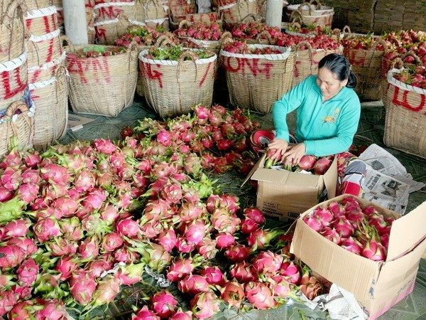 Chinese firms must report origin of Vietnamese fruits hinh anh 1