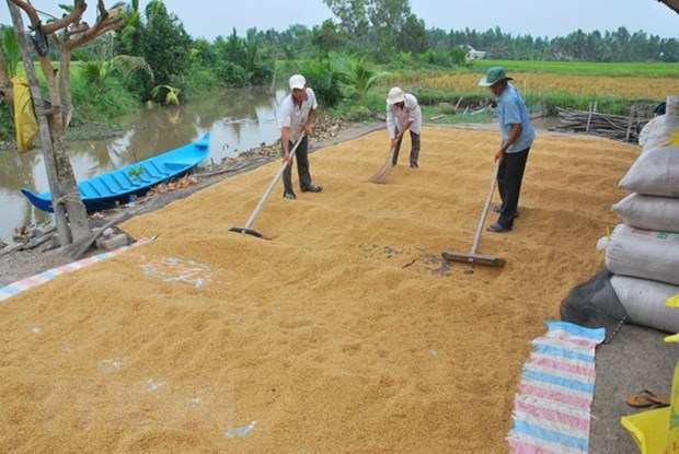 Import demand continues boosting Vietnam's rice export hinh anh 1