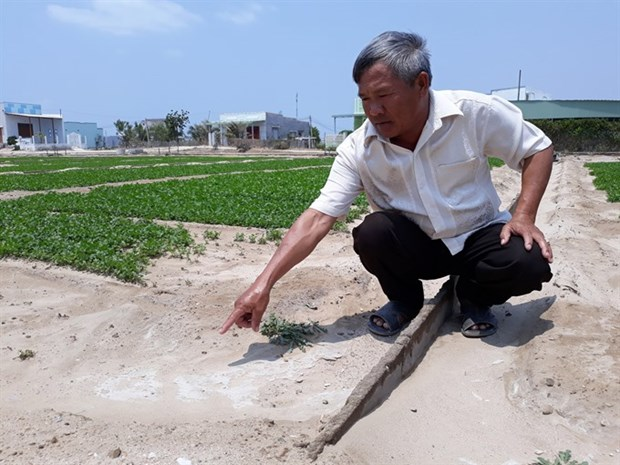 Saline intrusion occurs in south central province hinh anh 1