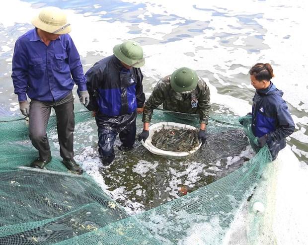 Aquatic catch, aquaculture output enjoy growth in first quarter hinh anh 1