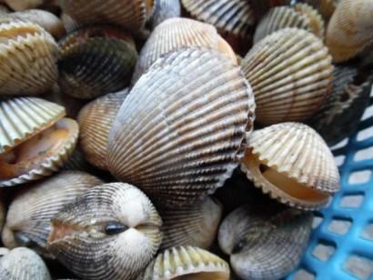 Binh Thuan bans mollusk, bivalve catching temporarily hinh anh 1
