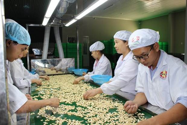 Cashew exports surge in first quarter hinh anh 1