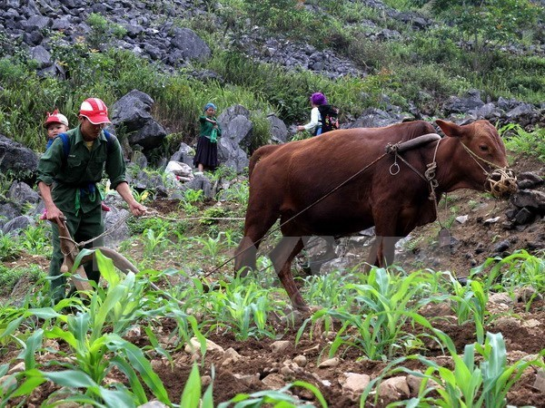 World Bank report: Vietnam continues to reduce poverty hinh anh 1