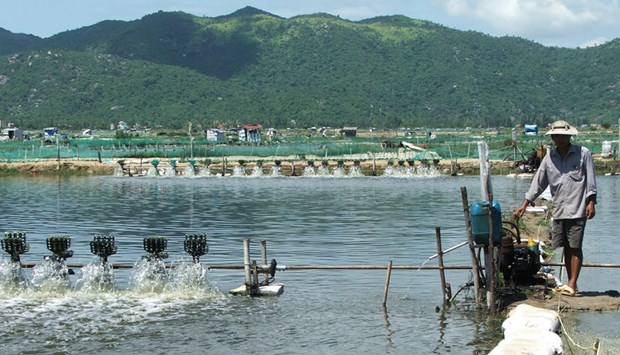 Solutions sought for sustainable fishery in Phu Yen hinh anh 1