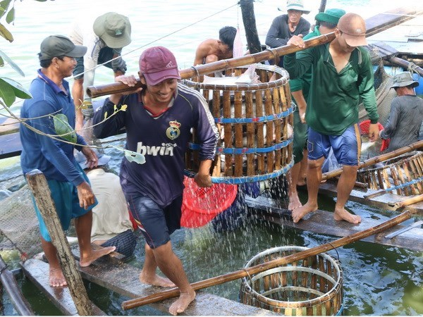 Three-tier cooperation plan to boost tra fish quality approved hinh anh 1