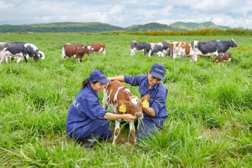 Vinamilk to build four hi-tech dairy farms in Thanh Hoa hinh anh 1