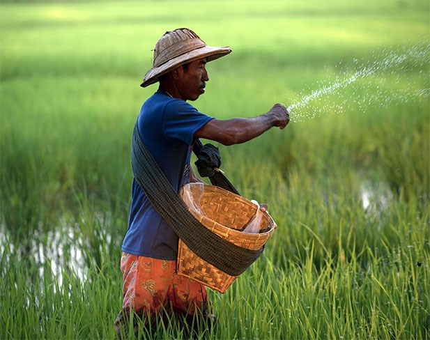 Myanmar earns 1.11 billion USD from rice exports hinh anh 1