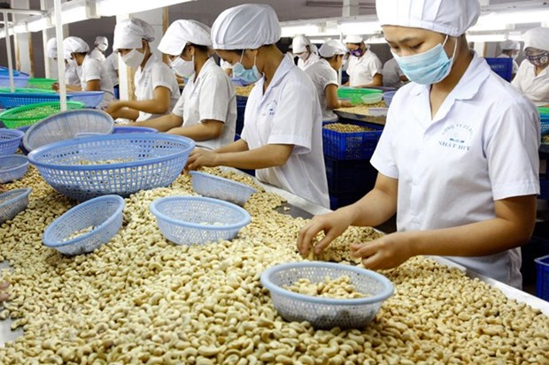Binh Phuoc cashew receives geographical indication hinh anh 1