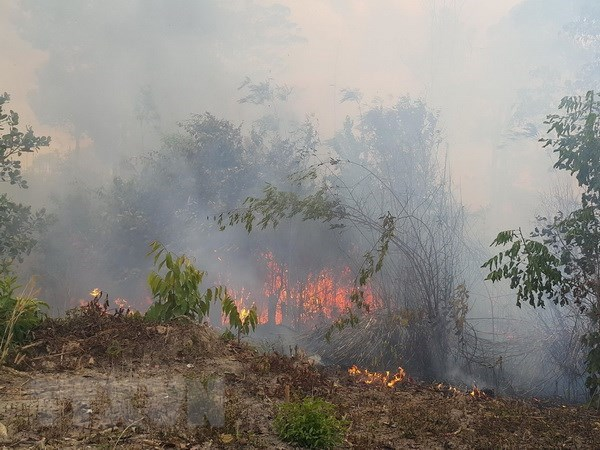 Central Highlands region works to prevent forest fire in dry season hinh anh 1