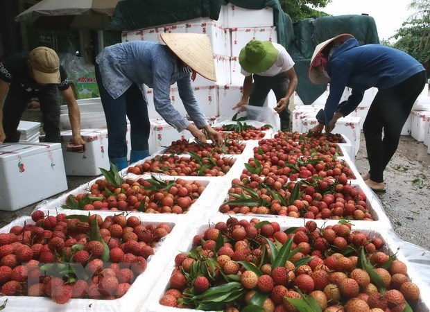 Vietnam targets 10 billion USD from fruit, vegetable exports hinh anh 1
