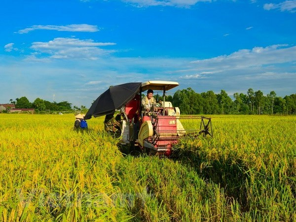 Vietnam sets to have 15,000 effective agricultural cooperatives hinh anh 1