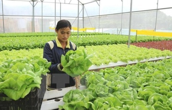 Ho Chi Minh City supports agricultural start-ups hinh anh 1