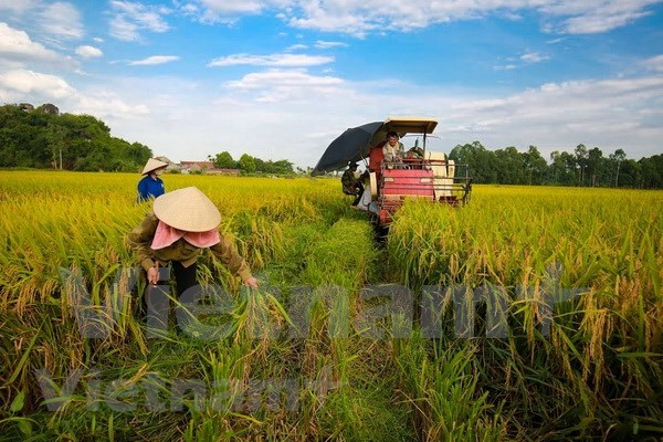 Book on green economy for sustainable development launched hinh anh 1