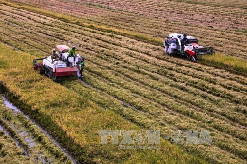 Sustainable agro-project benefits 27,650 farmers in Can Tho hinh anh 1