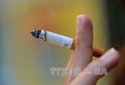 Over 45 percent of Vietnamese males smoke hinh anh 1