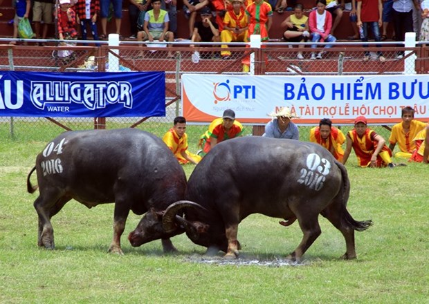 Ministry of culture: Festivals should stop violence hinh anh 1