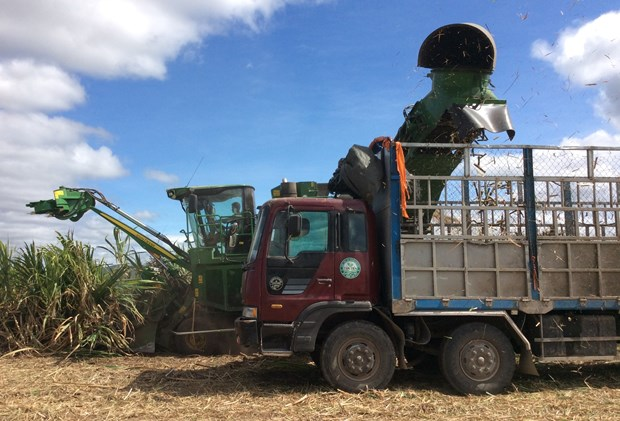 Vietnam to keep sugarcane area at 300,000ha by 2030 hinh anh 1