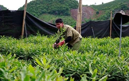 Rural areas – potential market for enterprises: Nielsen Vietnam hinh anh 1