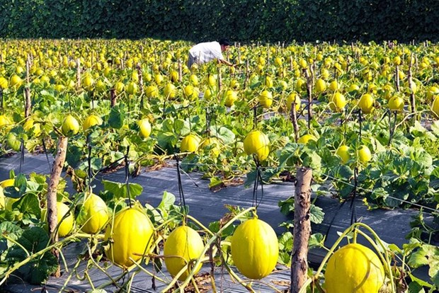 Agricultural innovation needed for growth hinh anh 1