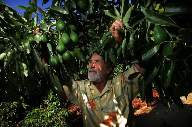 Vietnam, Mexico seek partnership in food industry hinh anh 1