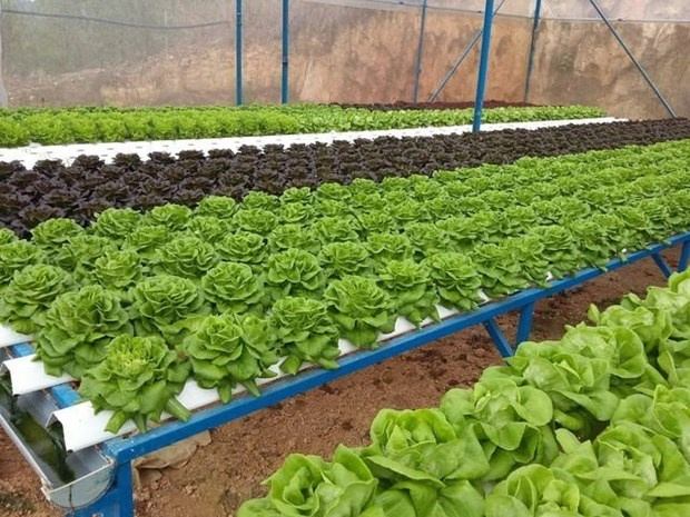 HCM City to get high-quality farm products from Long An hinh anh 1