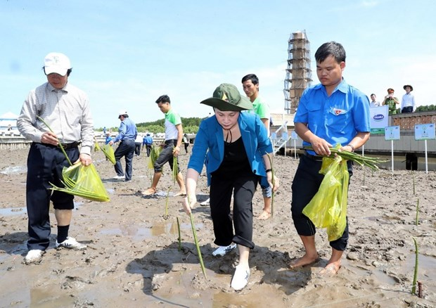 Trees planted at national trig point in Ca Mau hinh anh 1
