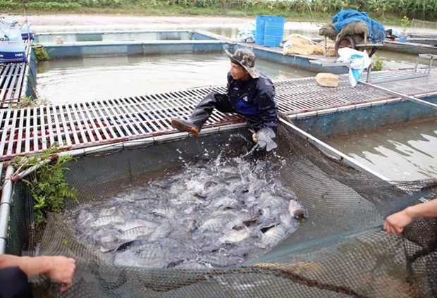 Aquaculture output picks up 6 percent in four months hinh anh 1