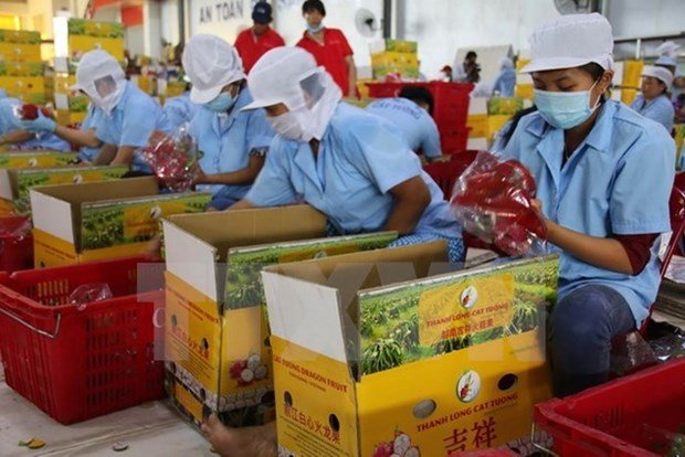 Fruit-vegetable surpasses crude oil in export earnings hinh anh 1