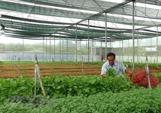 Forum seeks solutions for high-tech agriculture hinh anh 1