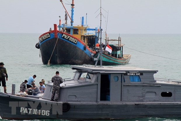 No more illegal fishing since beginning of 2018 hinh anh 1