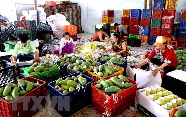 Vietnam imports 451 million USD worth of fruit, vegetable in 4 months hinh anh 1