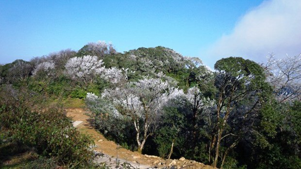 Cao Bang establishes Phia Oac – Phia Den National Park hinh anh 1