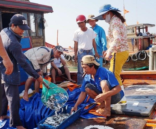 Da Nang increases trace of fishery origins hinh anh 1