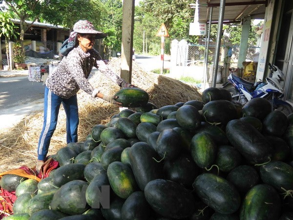 Vietnamese farm produce seeks to reach French customers hinh anh 1