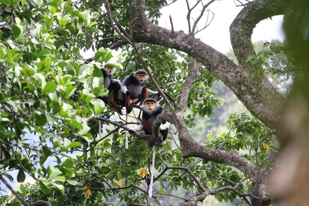 Artistic programme marks 25 years of action for biodiversity hinh anh 1