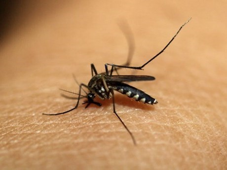 Southeast Asian nations, China pledge to fight malaria hinh anh 1