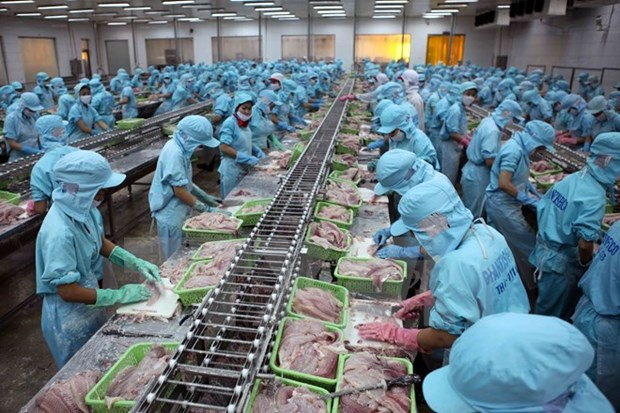 Tra fish exports to China continue to thrive hinh anh 1