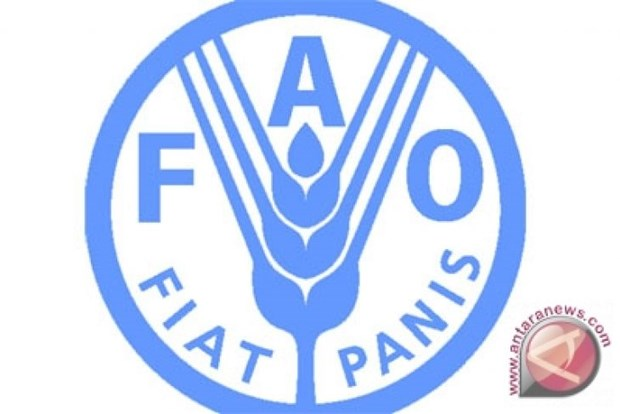 Indonesia, FAO renew cooperation in timber trade hinh anh 1