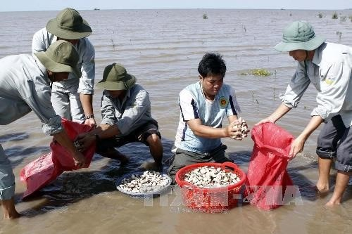 Mekong clam farmers develop sustainable value chains hinh anh 1