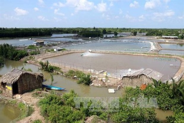 Renewable energy eases pressure for shrimp farmers hinh anh 1