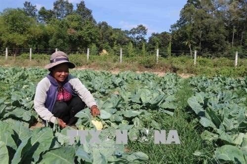 Tra Vinh farmers lend farmland for free to poor hinh anh 1