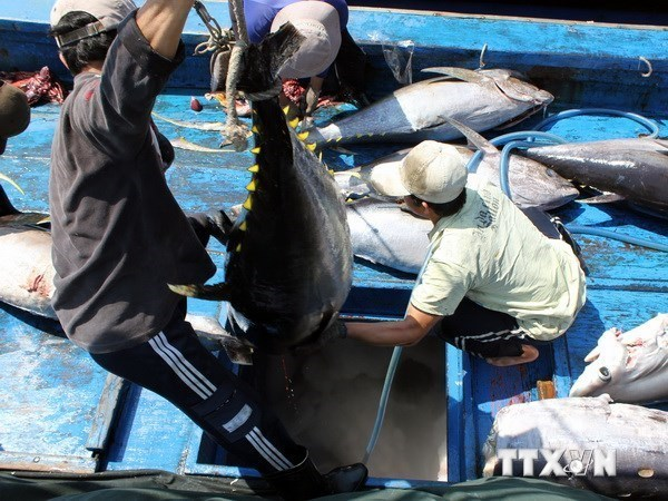 Five-month fishing output surges 2.4 percent hinh anh 1