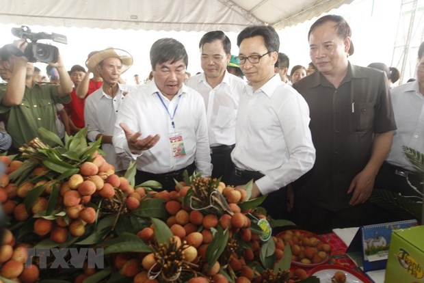 Thanh Ha litchi festival opens in Hai Duong hinh anh 1