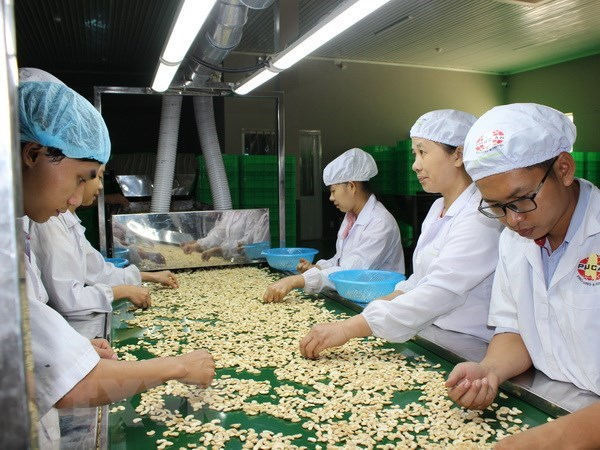 Cashew nut factories halt operations due to lack of materials hinh anh 1