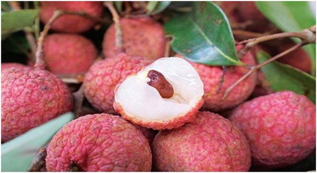 Fresh litchi to be served on Vietnam Airlines' flights hinh anh 1